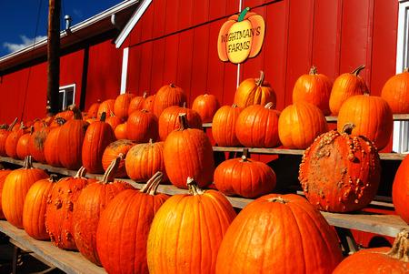 October is Pumpkin Time