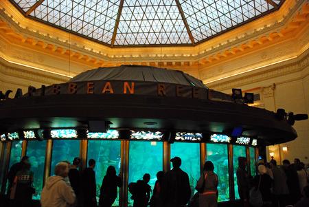 carribean: Carribean Reef Exhibit at the Shield Aquarium, Chicago