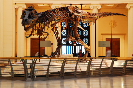 t  rex: Sue, the most complete t Rex ever found, on display at the Field Museum in Chicago Editorial