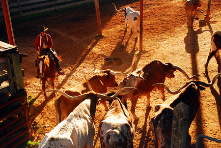 Roundup at the Ft Worth Stockyards 版權商用圖片 - 44330882