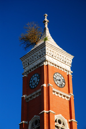 municipal court: Tree on Tower Stock Photo