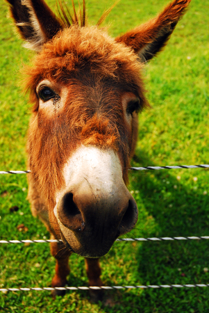 fenced: A Donkey Shows a Face that Only a Mother Could Love