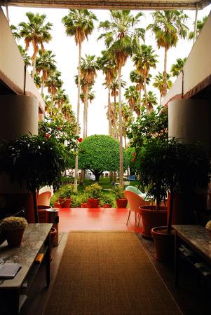delano: Delano Hotel Backyard Garden Editorial
