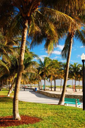 Palm trees frame a Path through Lummus Park, Miami Beach