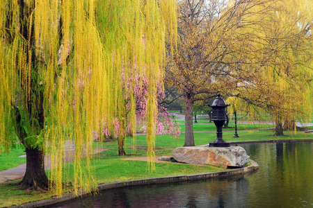 Spring Arrives at Boston Common
