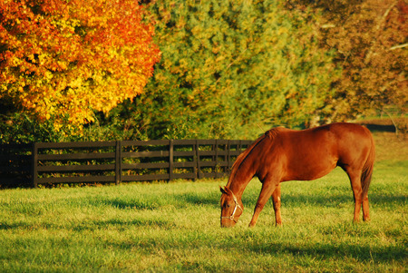 Autumn, Horse Country