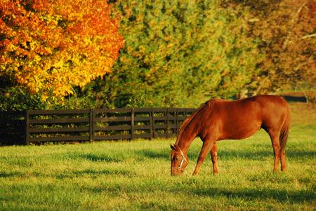 Herfst, Horse Country Stockfoto