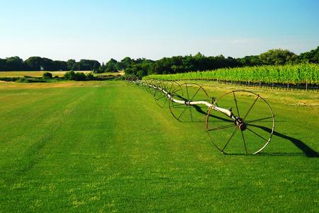 Long Island Sod Farm