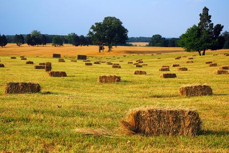 Bales of Hay at the Mansassas Battlefield Virginia Stock Photo