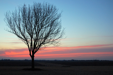 A Lone Bare Tree at Sunset