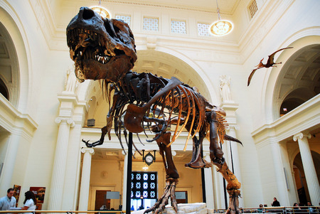 discovered: Sue, the Most Complete T Rex Ever Discovered, on Display at the Field Museum in Chicago Editorial
