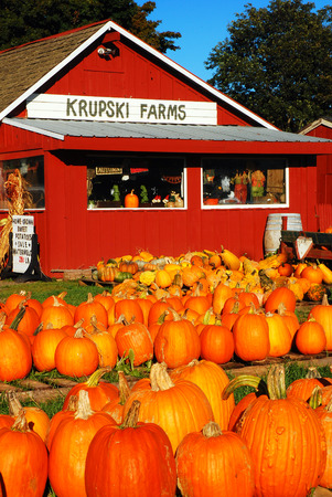 A farmstand showing a bounty of pumpkins Editorial