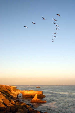 Pelicans Fly in a V Formation Stock Photo