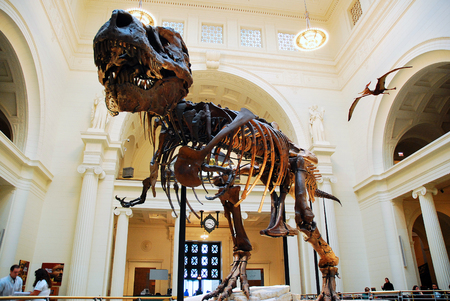 Sue, the Most Complete T Rex Ever Discovered, on Display at the Field Museum in Chicago Editorial