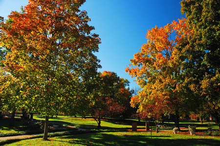 Autumn colors brighten a park on a sunny day