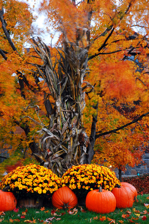 Autumn Decor 写真素材