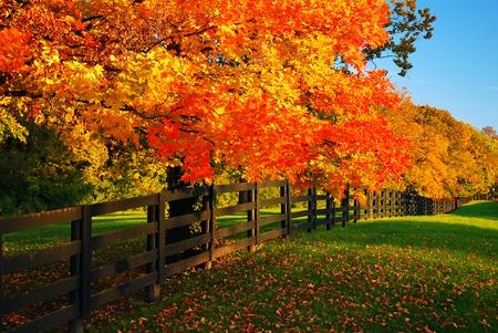Landelijke herfst Stockfoto