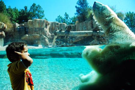 A child reacts to a polar bears roar