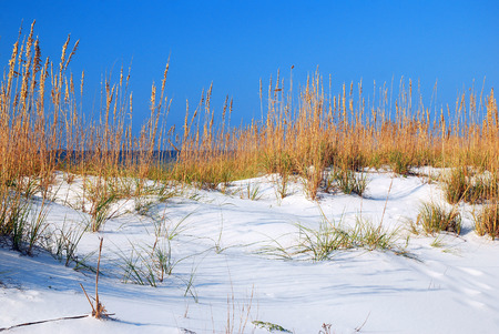 Sea Oats at the Gulf Shore