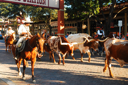 The Famous Ft Worth Stockyards Cattle Drive