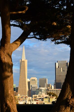 The San Francisco skyline is framed by a tree Editorial