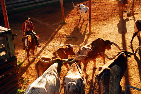 A cowboy begins the Roundup at the Ft Worth Stockyards Редакционное