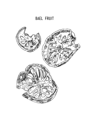 Bael fruit , Sketch line art hand drawn illustration.  イラスト・ベクター素材