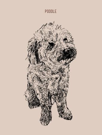Ilustración de vector de caniche perro. Bosquejo de perro dibujado a mano.