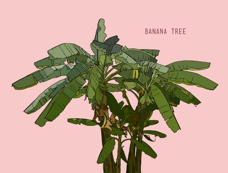 Banana tree,hand drawn sketch line art isolated vector. Tropical tree , leaf banana style Illustration