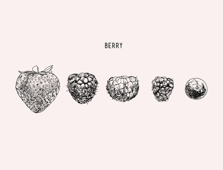 rasberry: Hand drawing set of vector sketches. Mixed berries illustration.
