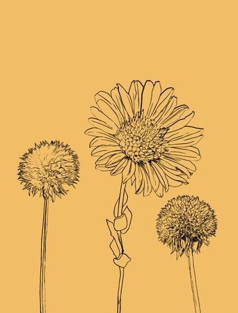 flowers calendula clover . illustration yellow color flower.