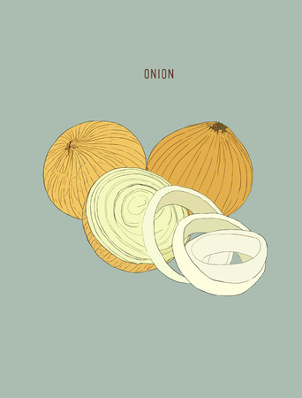 onion rings: Onion hand drawn vector set. Full, rings and Half cutout slice.