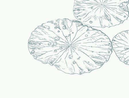 蓮の葉のスケッチ ベクトルを水滴します。  イラスト・ベクター素材