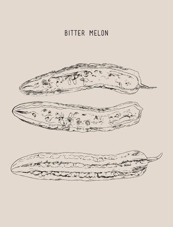 balsam: Bitter melon pod , chopped sketch vector.