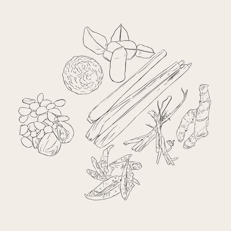 Thai herb , ingredient spicy thai food . collection of galic , kaffir lime lemongrass ,dried chilli ,coriander root and ginger. sketch vector.
