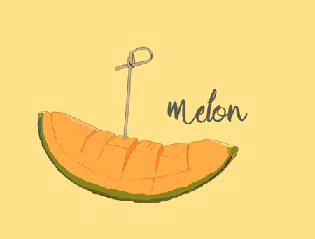 A melon in hand drawn design isolated on white background. Isolated on white background. Muskmelon - Galia. Honeydew melon.