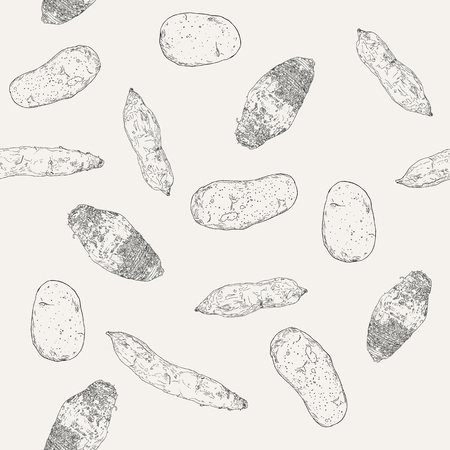 Hand drawn sketch taro, sweet potatoes and potato , seamless pattern sketch vector.