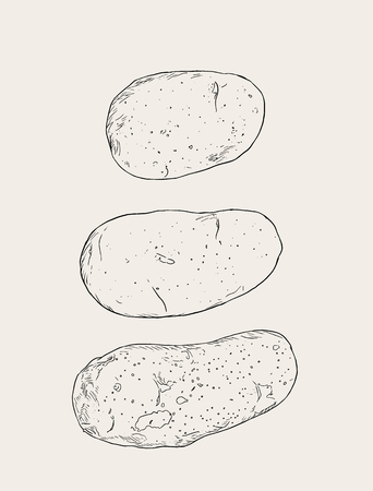 Set of pototoes or purper potatoes, hand drawn sketch vector. Illustration