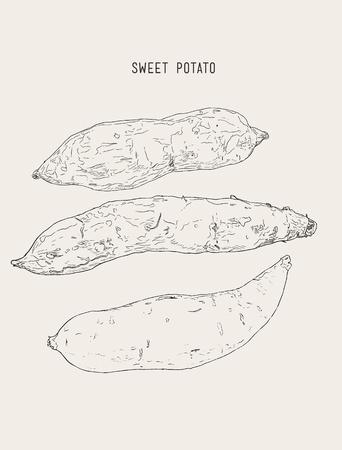 Set ot sweet pototoes or purper potatoes, hand drawn sketch vector. Illustration