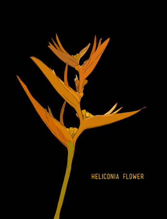 Heliconia flowers (wild plantain, lobster claw, false bird-of-paradise flower, Heliconia rostrata). Hand drawn vector illustration Illustration