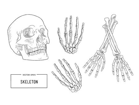 Vector sketch of human skeleton Vector Illustration
