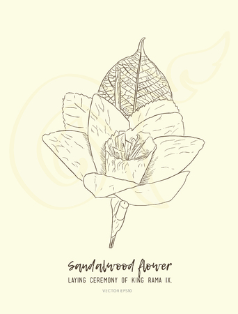Thai Artificial Funeral Daffodil Flower or Dok mai chan, hand draw sketch vector. Hand drawn sketch of Sandalwood flower-laying ceremony for mourn to king of thailand pass away. Иллюстрация