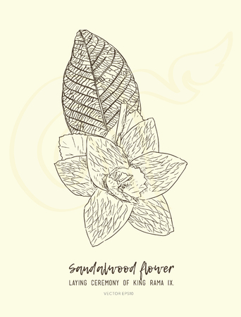 Thai Artificial Funeral Daffodil Flower or Dok mai chan, outline  hand drawn sketch vector illustration designed in sandalwood flower-laying ceremony for mourn to king of thailand pass away. Иллюстрация