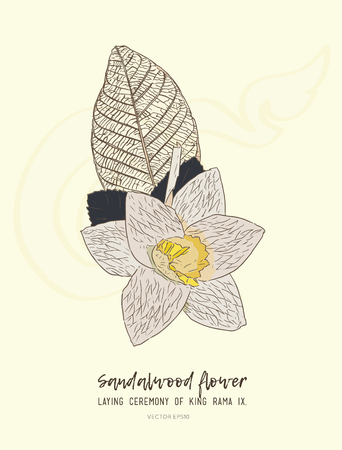 Thai Artificial Funeral Daffodil Flower or Dok mai chan , hand draw sketch vector.Sandalwood flower-laying ceremony  for mourn to king of thailand pass away.