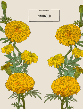 Decorative background with orange marigolds, symbol of mexican holiday Day of dead. Vector illustration.
