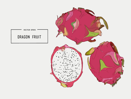 Hand drawn set of exotic fruits.
