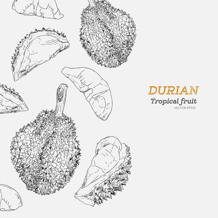 set of durian , king of fruit . hand draw sketch vector.