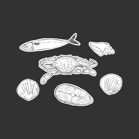 set of seafood , sea animal isolated vector. Vector engraving illustration of highly detailed hand drawn seafood. Illustration