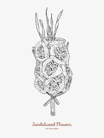 Sandalwood flowers for funeral, hand draw sketch vector. Иллюстрация