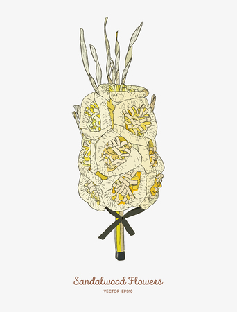 Sandalwood flowers for funeral, hand draw sketch vector. Illustration